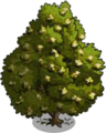 Bay Laurel Tree2-icon.png