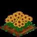 Sunflower 100