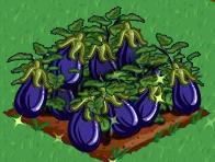 Plik:Eggplant extra100.png