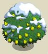 Alma Fig Tree8-icon