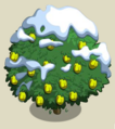 Alma Fig Tree8-icon.png
