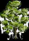 Durian Tree3-icon