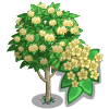 Japanese Angelica Tree-icon