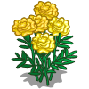 Yellow Marigolds-icon