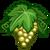 Chardonnay-icon