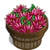 Allspice Pepper Bushel-icon