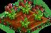 Garnet Poppy 66