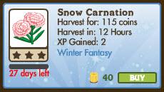 Snow Carnation Market Info
