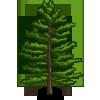 White Pine Tree (decoration)-icon