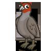 Grey Partridge-icon