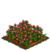 Red Clover extra100