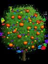 Blood Orange Tree6-icon