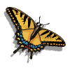 Collect tigerswallowtail