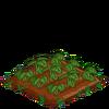 Strawberries-33