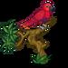 Eclectus Parrot-icon