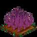 Purple Asparagus 66