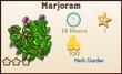 Marjoram Market Info