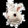 Baby Angora Rabbit