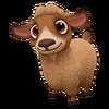 Baby Caramel Pygora Goat