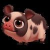 Baby Teacup Pig