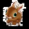 Baby Flemish Giant Rabbit