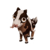 Baby Nubian Goat
