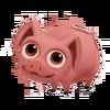 Baby Landrace Pig