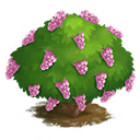 Pink Lilac Tree