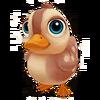 Baby Mandarin Duck