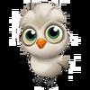 Baby Silkie Chicken