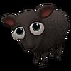 Baby Massese Sheep