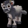 Baby Tundanca Cow