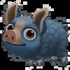 Baby Guinea Hog