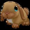 Dwarf Lop Rabbit