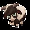 Baby Jacob Sheep