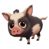 Baby Black Spotted Ossabaw Pig