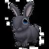 Blue Flemish Giant Rabbit