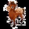 Baby Appaloosa Horse