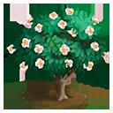 Camellia Tree