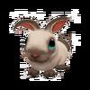 Sealpoint Dwarf Rabbit