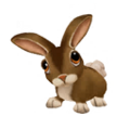 Cottontail Rabbit.png