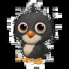 Baby Black Leghorn Chicken