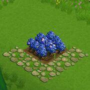 BlueberryField
