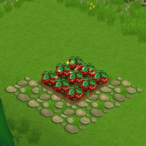 File:StrawberryField.jpg