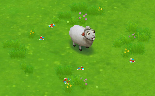 File:Sheep.jpg