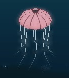 Jellyfish at night