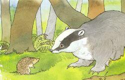 Kindly Badger