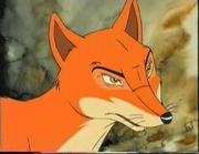 Fox older