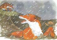 Lean Fox trapped
