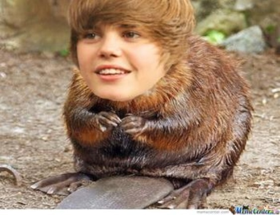 Image result for beaver man